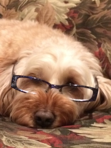 This is how Maddie would look like if she was smart.