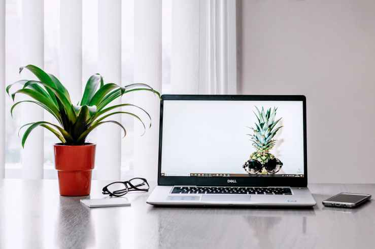 photo of laptop near plant